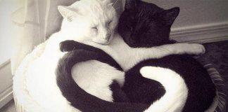 Fekete és fehér macska