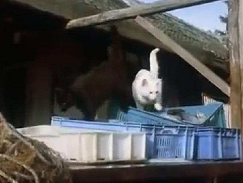 Macska-jaj