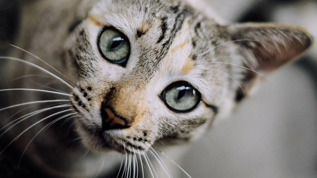 Mit kér a macska?