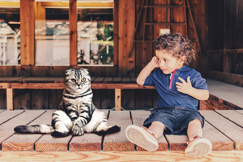 Bébiszitter macska