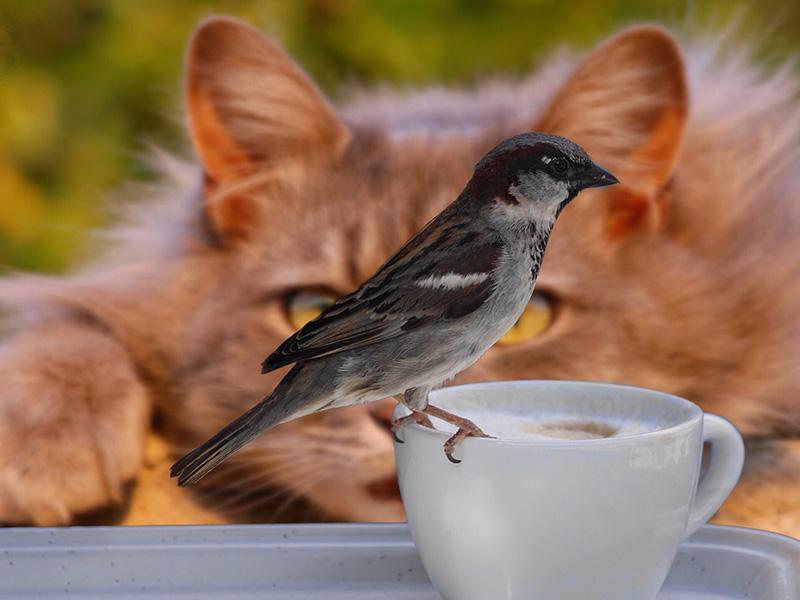 Madármegfigyelő macska