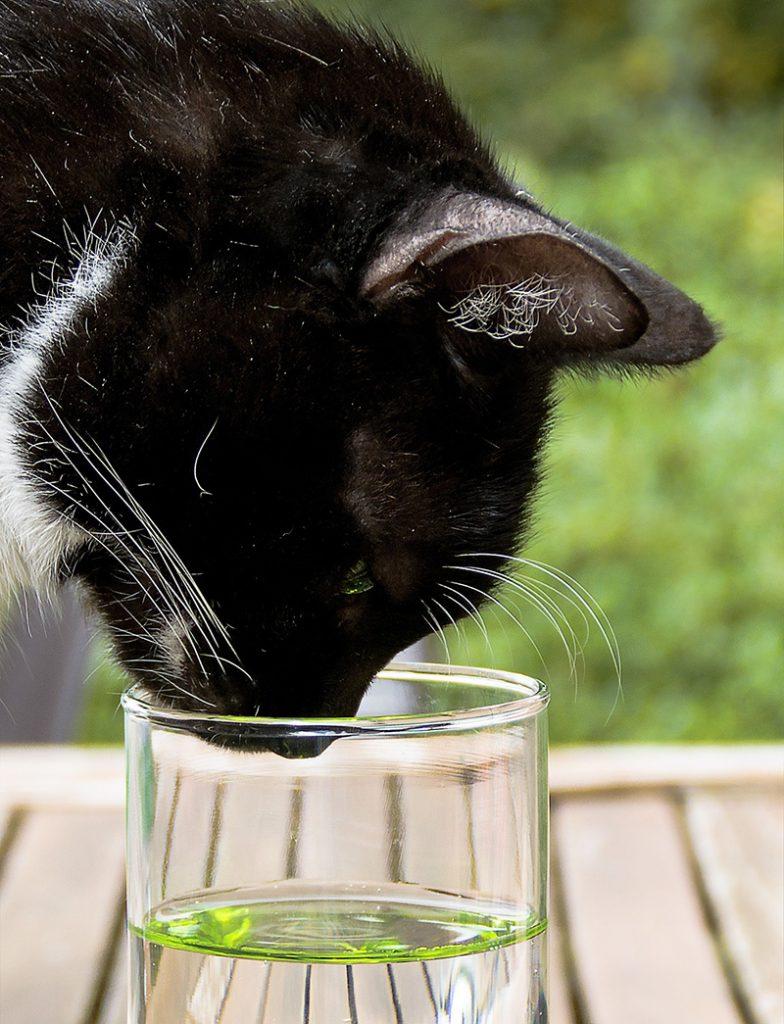 Vízvizsgáló macska