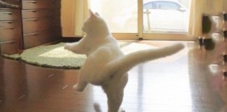 Ballerinacica