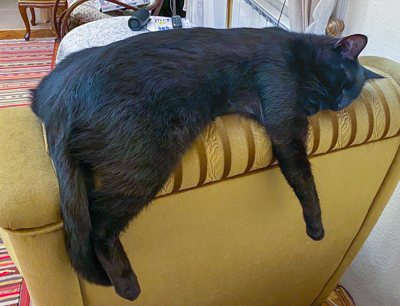 Alvó fekete macska