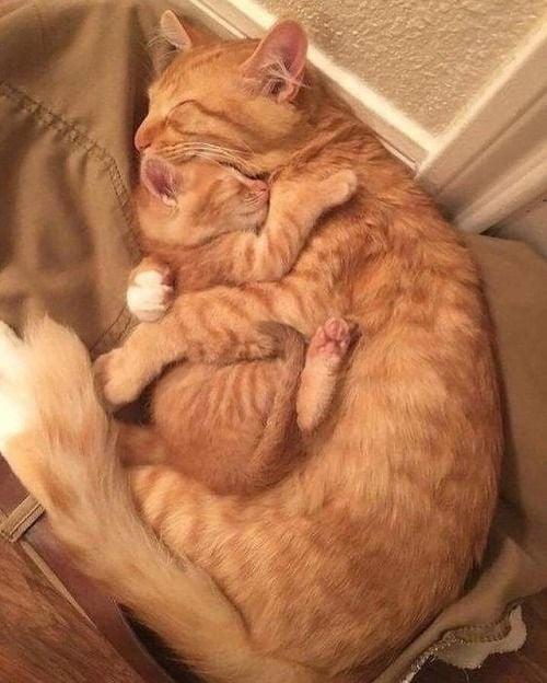 Kiscica, nagycica együtt alszik