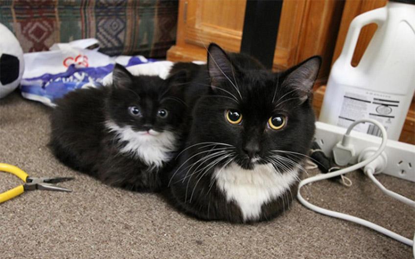 Kicsi és nagy macska