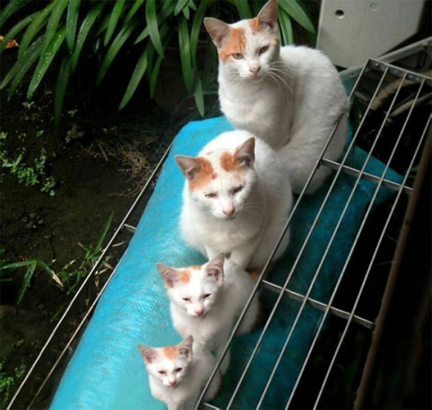 Egyforma macskák