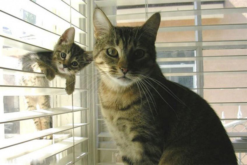 Macskák az ablaknál