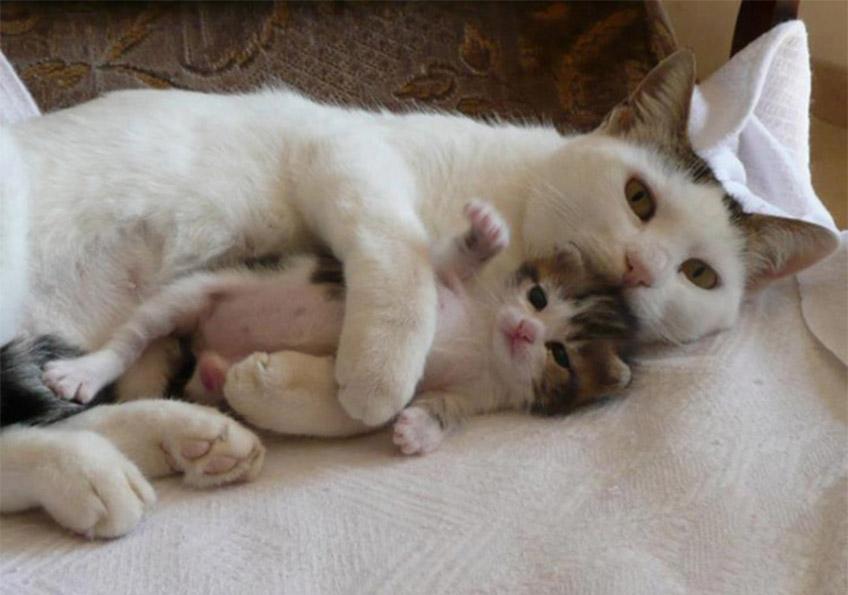 Mama és baba cica