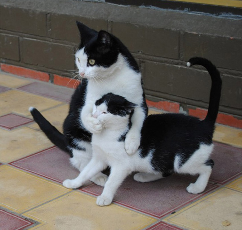 Kiscica & nagycica