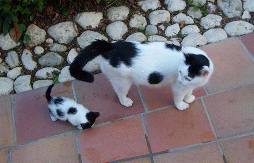Sétáló macskák