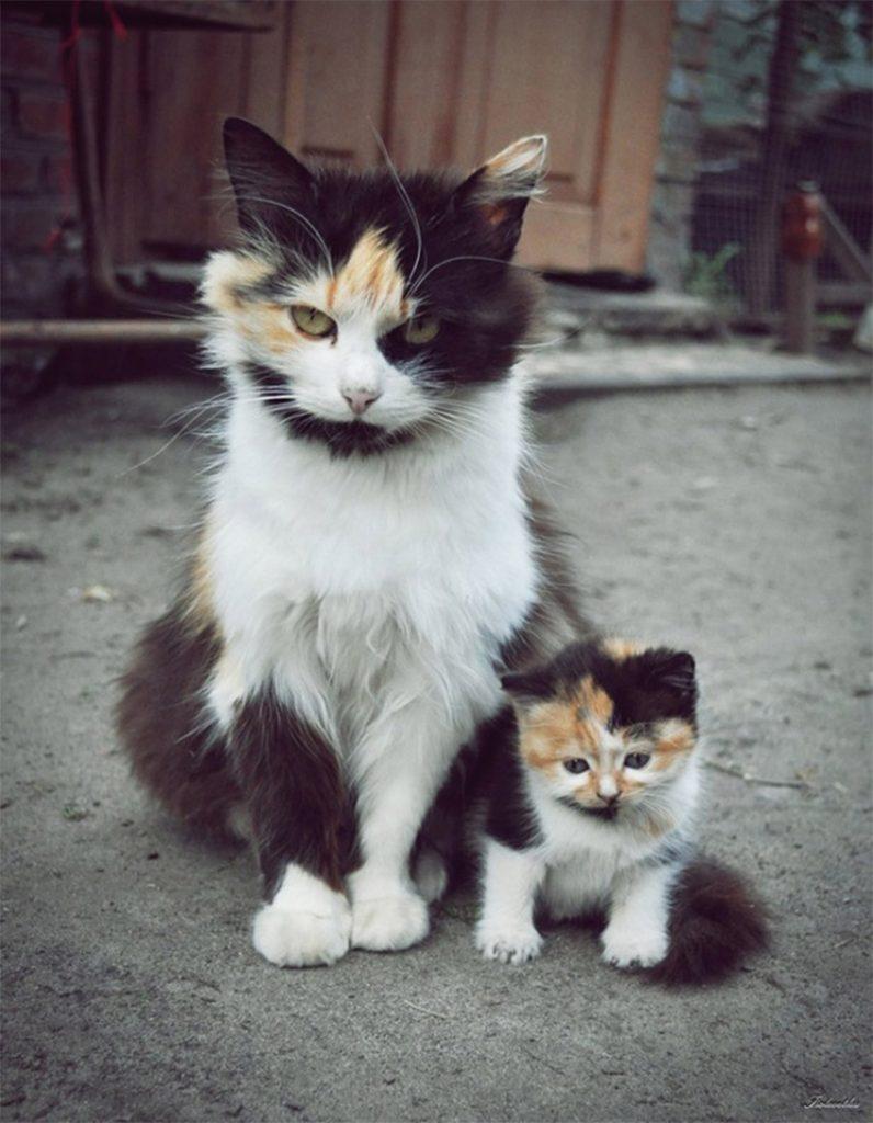 Nagymacska - kiscica