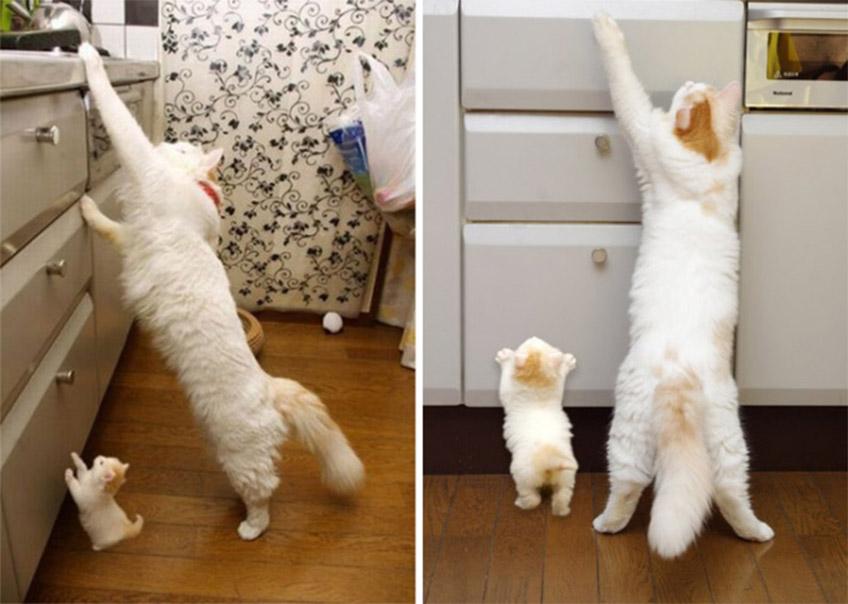 Macskák a konyhában
