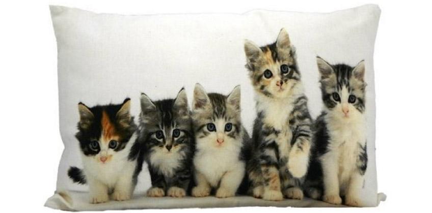 Párna kiscicákkal
