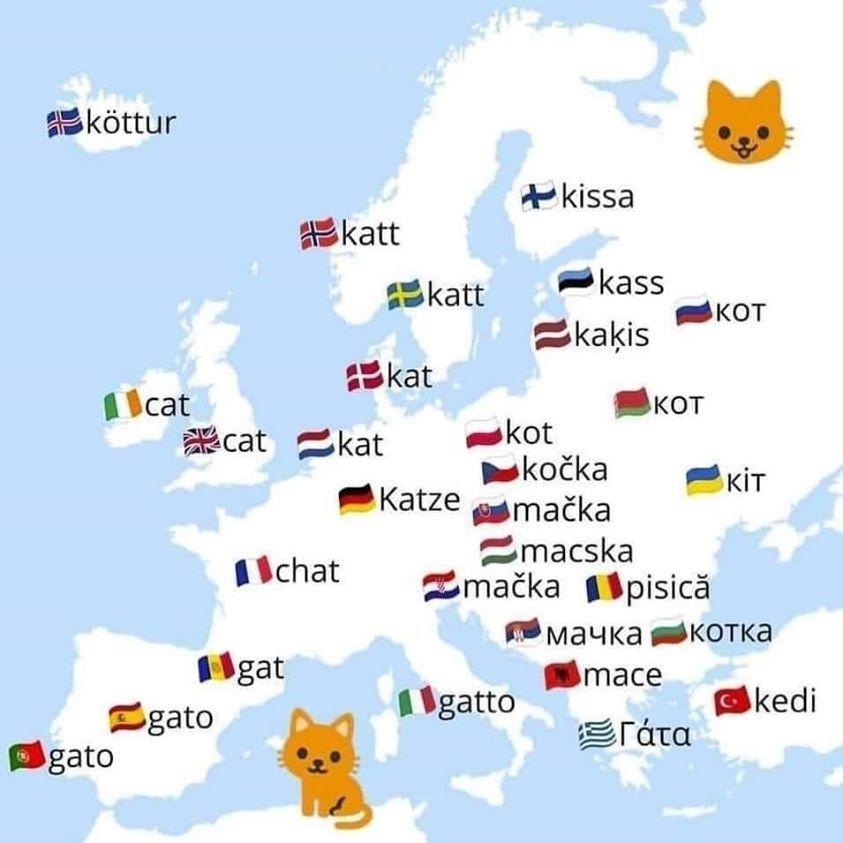 Macska-térkép