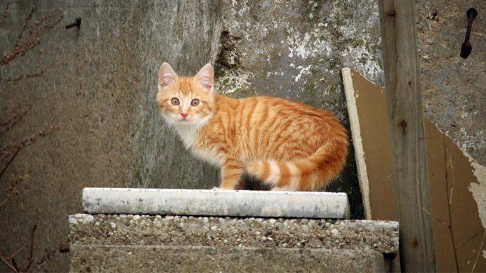 Rövid macskatörténelem