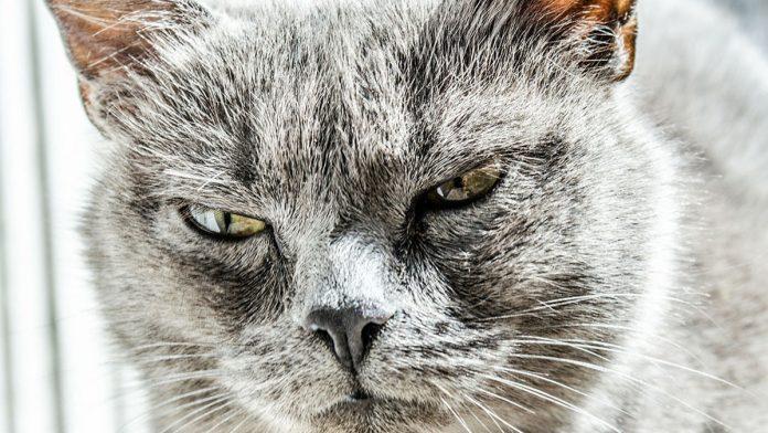 Mit utál a macska?