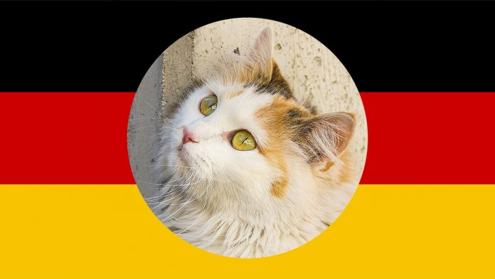 Macska német zászlóval