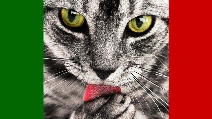 Olasz macska